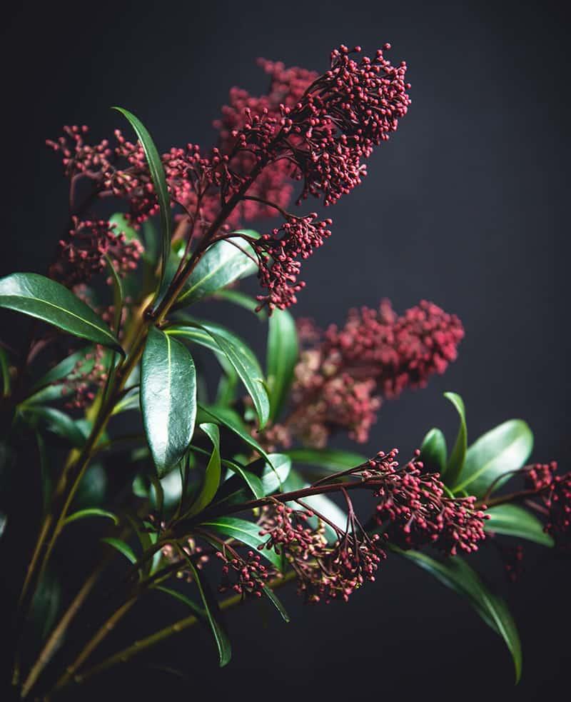 Flowers vor grauem Grund in einer Vase